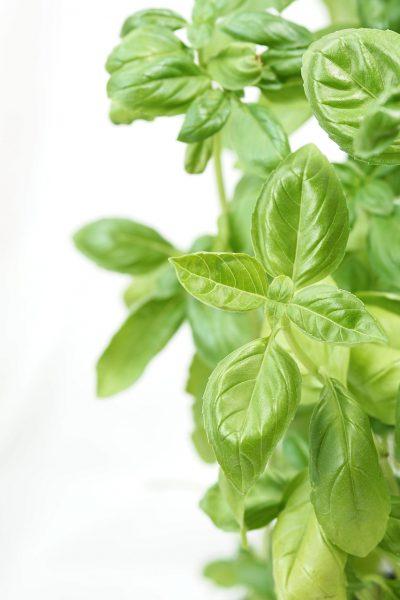 basil, aroma, italian
