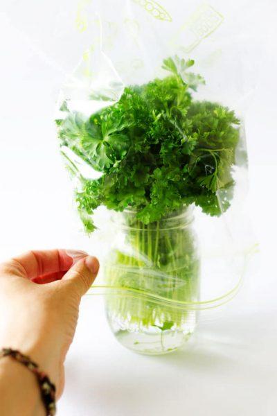 parsley-photo-3